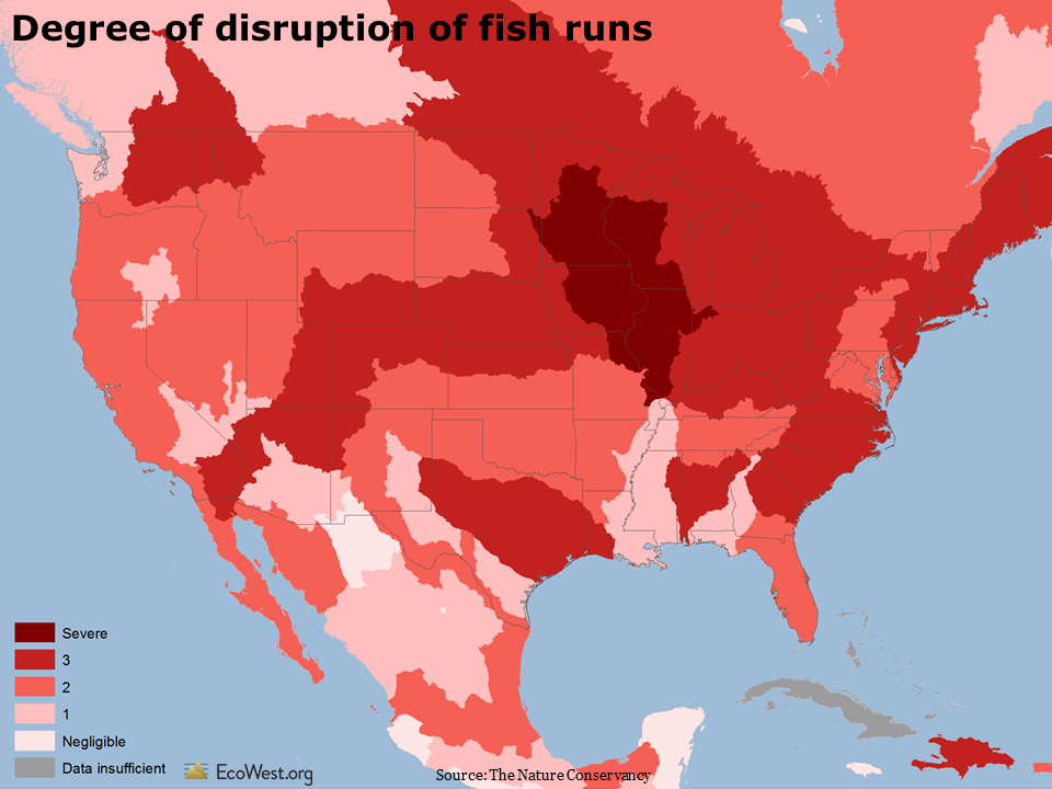Disruption of natural fish runs