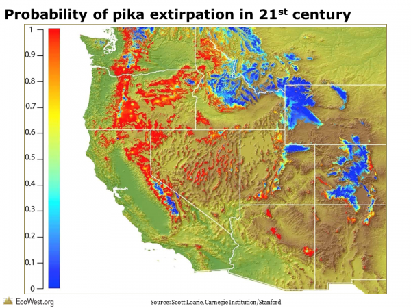 Probability of pika extirpation in 21st century